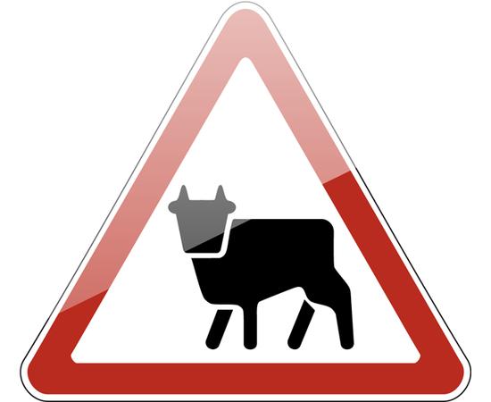 дорожный знак 1.26  Перегон скота, фото 1